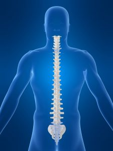 picture of a spine
