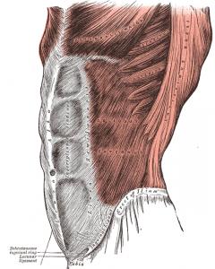 Picture of abdominals